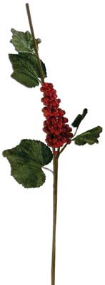 View CHRISTMAS BERRY BRANCH 31 INCH WITH LEAVES ASSORTED PREPRICED $2.99